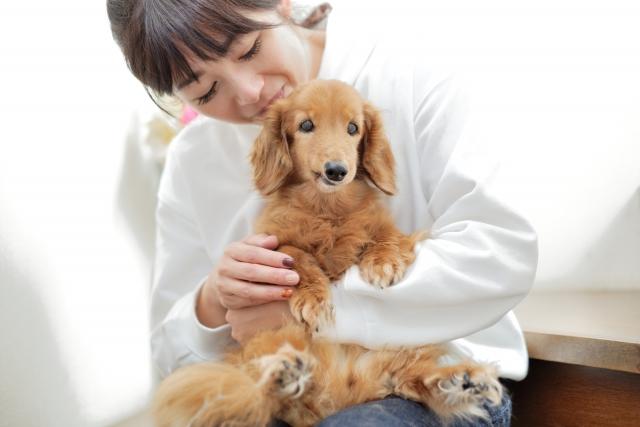 結論:動物好きやペット持ちにはおすすめのWiMAXプロバイダ